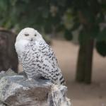 Ausflug zum Vogelpark Schotten