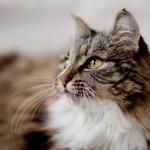 Katzengeburtstag, Mäuse, Osterhasen und Weidenkätzchen