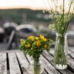 Freitagsblümchen und endlich Sommer