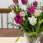 Erste Tulpen im Januar