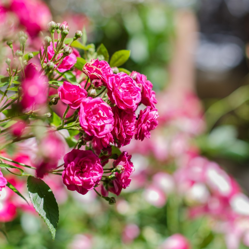 rosentage16_10