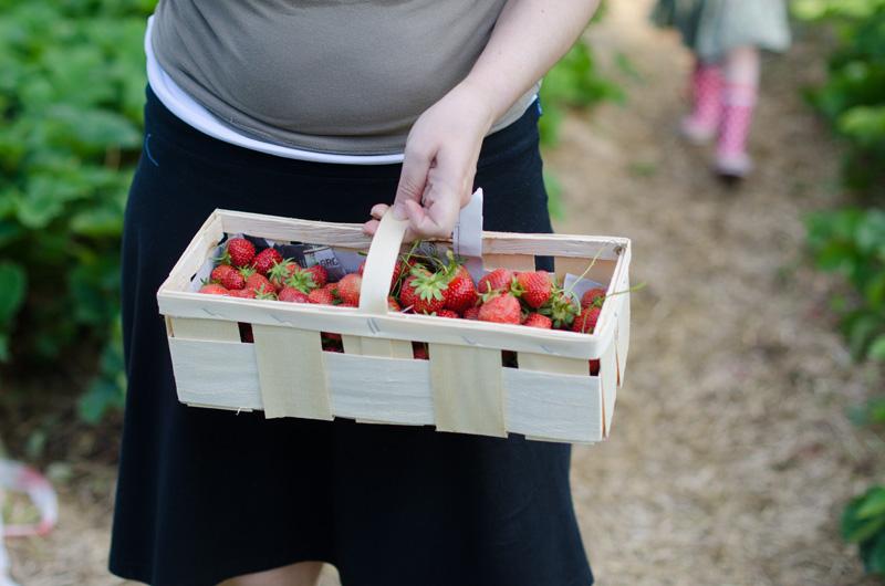 erdbeeren_1
