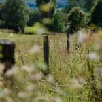 Throwback Thursday: Urlaubsbilder aus dem Hohen Vogelsberg