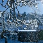 Der erste Schnee in unserem Garten